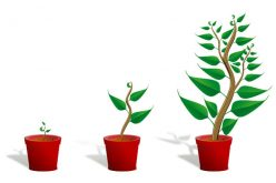 How Business Owners Can Grow Their Business