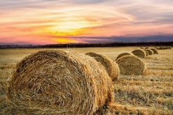 3 Farming Tips to Save Money
